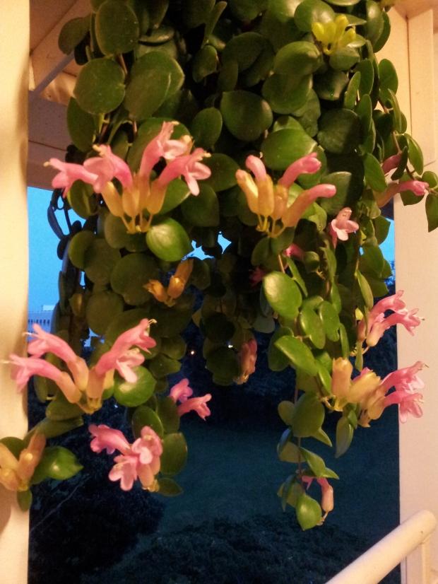 flowering buds!