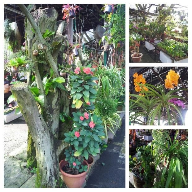 nursery - plant